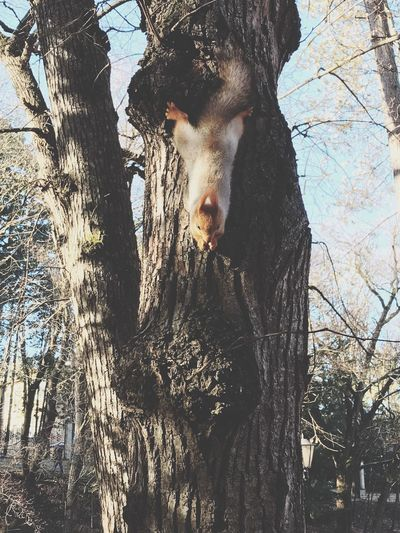 Low angle view of dog against trees