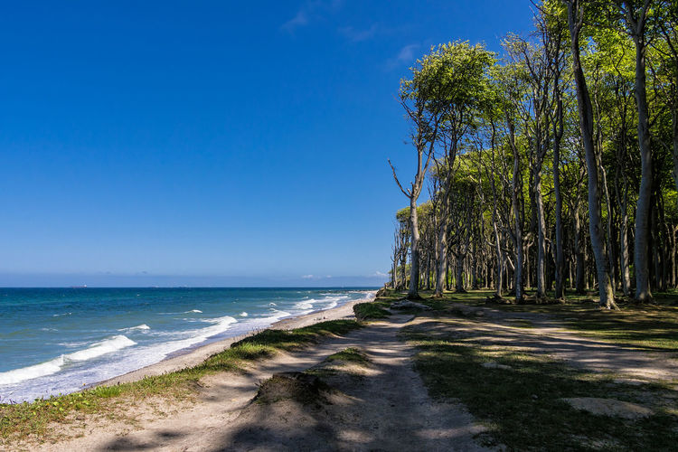 Coastal forest in Nienhagen, Germany. Baltic Sea Beauty In Nature Blue Clouds And Sky Coast Day Forest Gespensterwald Landscape Nature Nienhagen Germany No People Outdoors Scenics Shore Sky Tourism Tranquil Scene Tranquility Travel Tree Vacation