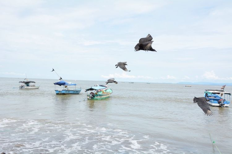 Bearded vultures flying over sea with boats against sky
