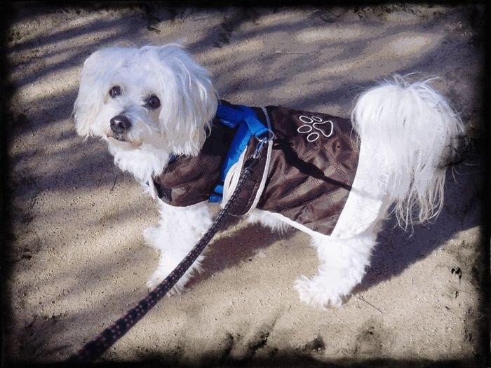 mon Amour tu aurais pu rester encore un peu avec moi ♡♡♡♡ Coeur Amour Tendresse Animaux Dog Pets Domestic Animals One Animal Mammal Animal Themes Portrait