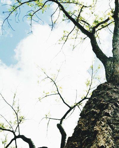 Raízes da vida!!! Arvores... 🌿❤ Folhas Que Caem Folhasnovas