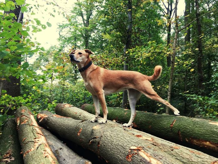 Strike a pose Model EyeEm Selects Canine Dog Animal One Animal Animal Themes Mammal Pets Nature Pet Collar Outdoors