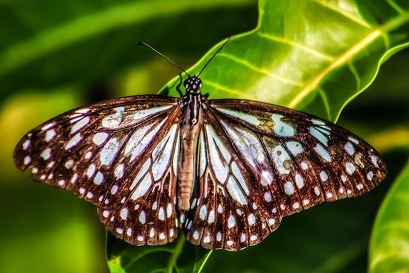 Butterfly Macro Insect Beautiful Wings Nature Design Patterns Vibrant Pw_camouflageblend Pw_mumbai Thane India
