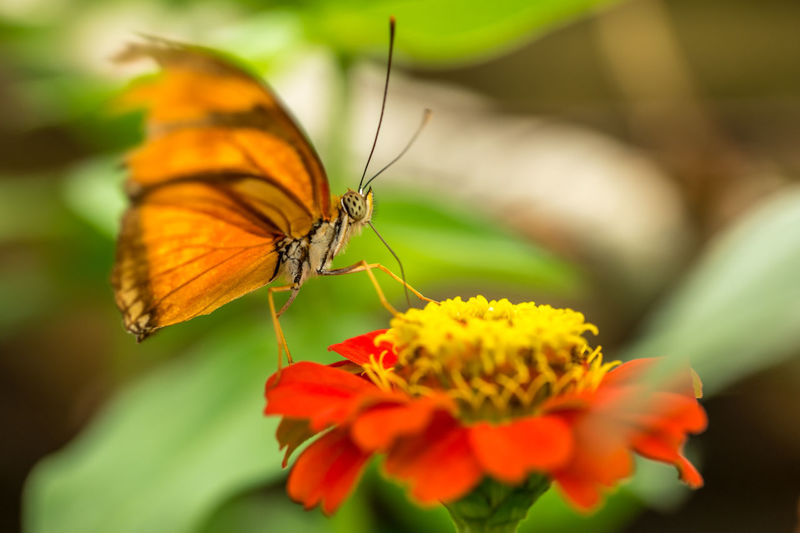 Close-up of butterfly on orange flower at park