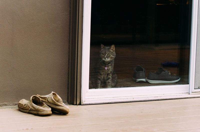 Cat Shoe Glass - Material No People Pair Window Transparent Indoors  Day Entrance Animal Themes Door Nature