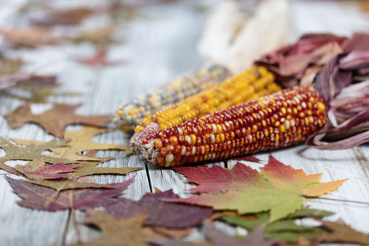 Close-up of corns with autumn leaves on table