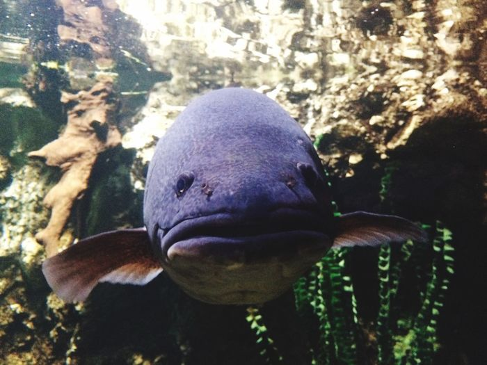 Big Fish Funny Swimming Exploring Nature Check This Out Creative Light And Shadow