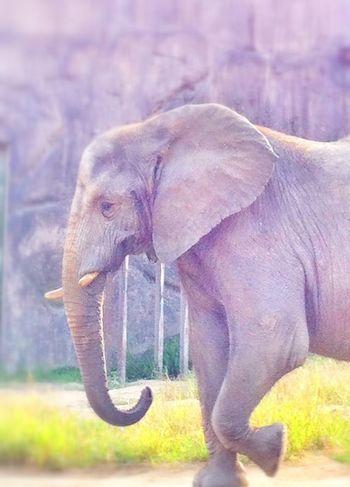 Animals EyeEm Nature Lover