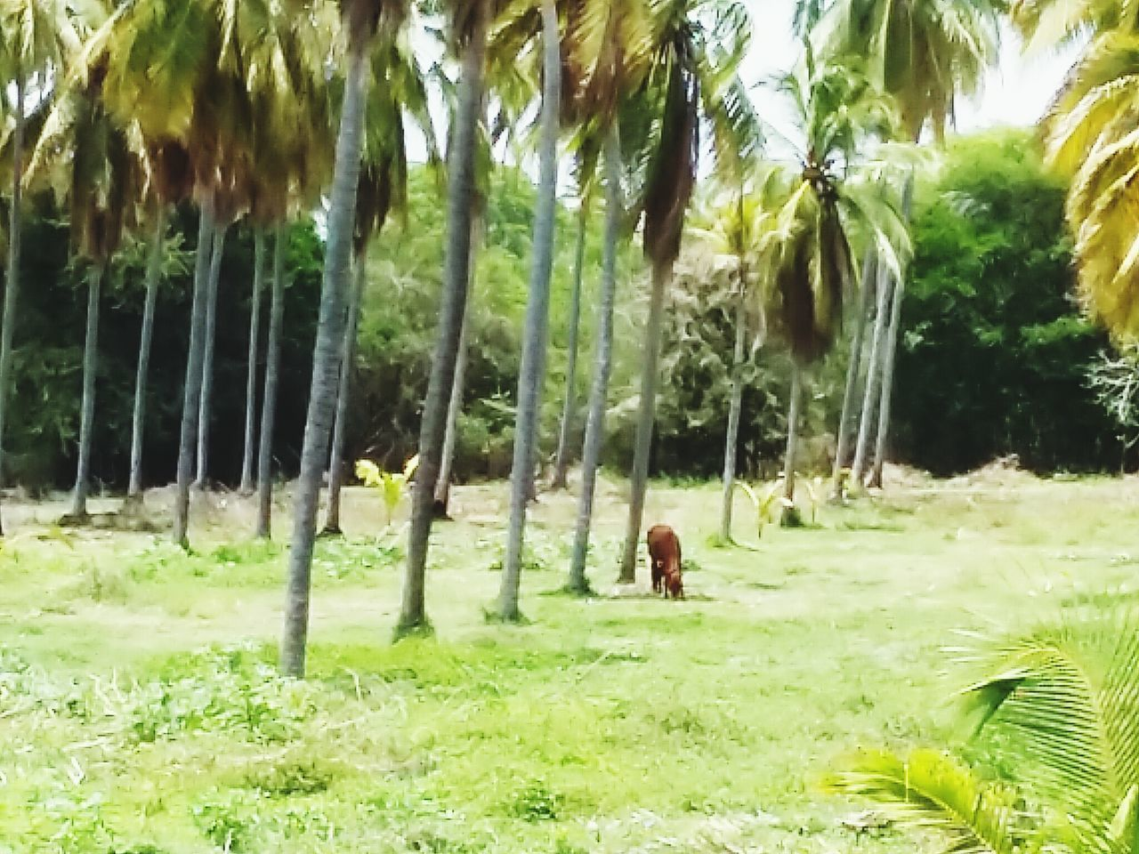 nature, growth, green color, grass, tree, day, outdoors, palm tree, men, real people, beauty in nature, people