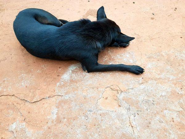 Dog Black Dog Beach Sand Sea Life The Still Life Photographer - 2018 EyeEm Awards