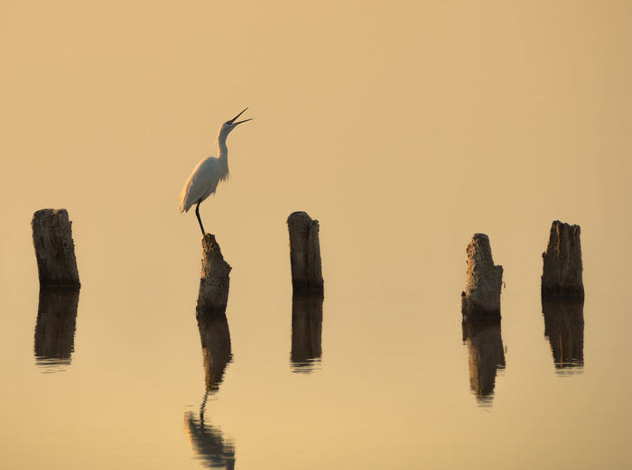 Birds Perching On Wooden Posts In Lake Against Sky During Sunset