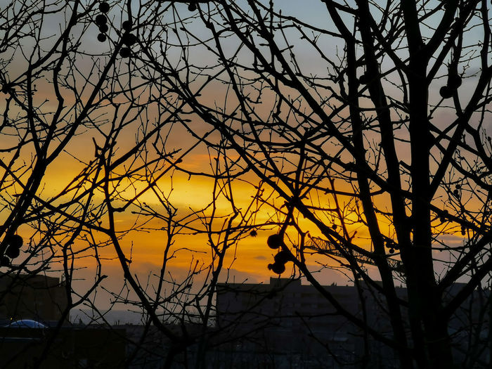 Low angle view of silhouette bare tree against orange sky