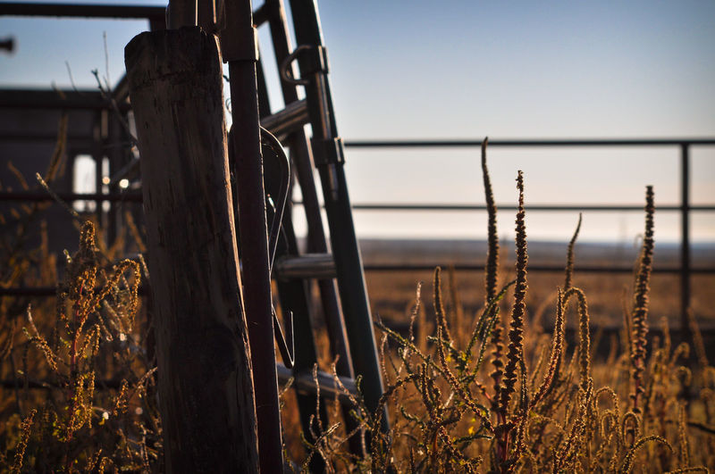 Fence Gate Rusty Rust Farm Ranch Livestock Rural Scene Rural Weed Weeds Sky Plains Prairie Colorado Sunlight Post Pole Fence Post Rurex Abandoned Places Abandoned Selective Focus Wooden Post Barrier