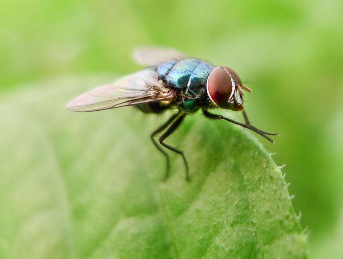 Fly washing