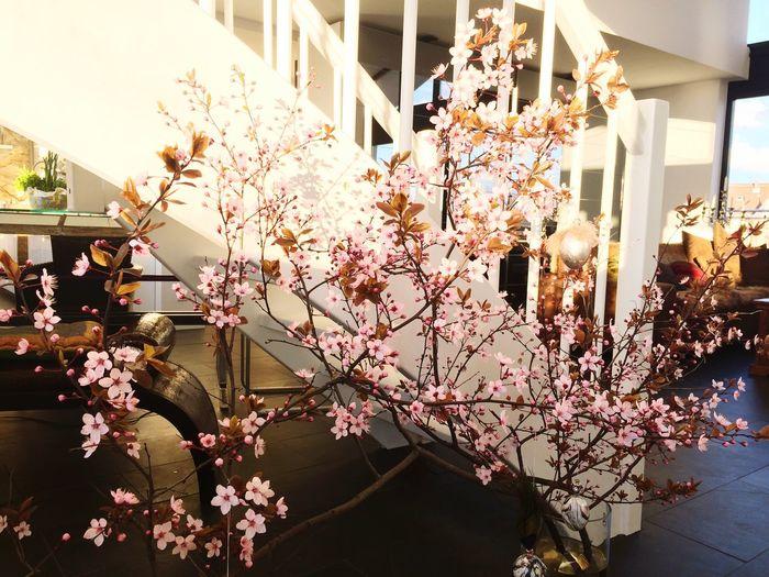 Sunshine Spring Frühling Apartment CrazyBunnyWG Flowers