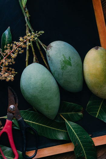 Tropical Tropical Fruit Mango Ripe Harvest Healthy Eating Food Fruit Food And Drink Leaf Freshness Green Color Wellbeing No People Close-up Nature Still Life Plant Part Plant Table Indoors  High Angle View Growth Day Black Background Agriculture Organic Scissors