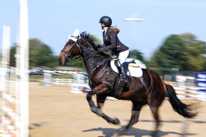 Horse Jumping Competition Domestic Animals Equestrian Equestrian Life Equine Horse Horse Jumping Horse Jumping Competition Horse Jumping Event Horseback Riding Jumping Motion Outdoors Riding Speed