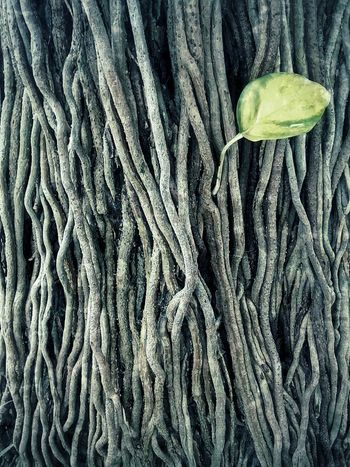 Nature Abstract Abstract Nature Art Close Up Close Up Photography Texture Pattern Texture And Pattern Roots Root Roots Of Tree Art Art Photography Nature Art Photography Leaves And Root Leaf And Root Creative Creative Photography Nature Nature Photography Nature Collection Pattern Root