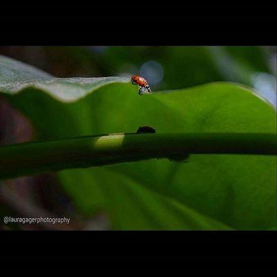 Nikonshots AspiringPhotographer Nikonphotography Nikon Nikon_photography_ Nature Baltimoreaquarium Ladybugs