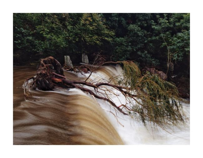 Touché coulé Waterfall Tree Auto Post Production Filter Plant Transfer Print No People Nature Day