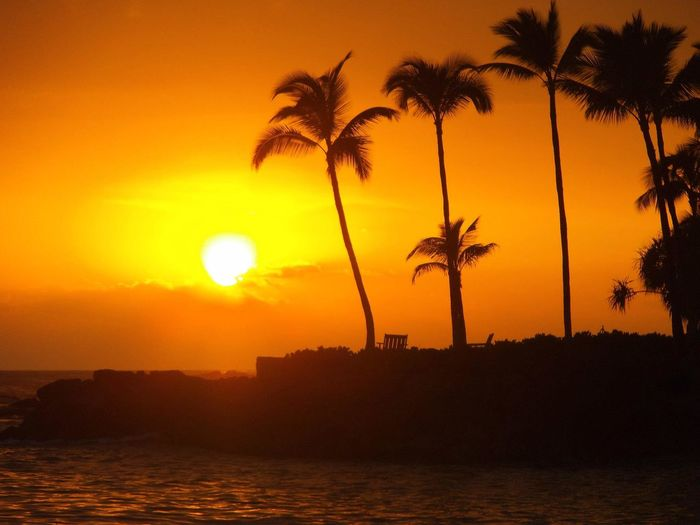 Beauty In Nature Calm Cloud Growth Hawaii Idyllic Majestic Nature Ocean Orange Color Outline Palm Tree Scenics Sea Silhouette Sky Solitude Sun Sunset Tall - High Tranquil Scene Tranquility Tree Water Waterfront