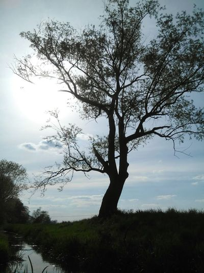 Treescape & sun Sky Sunshine Springtime Pretty♡ Sunsetlover Summer ☀ Nature Water Love To Take Photos ❤ Nature Photography Hannah CSI Marie Hasenglück