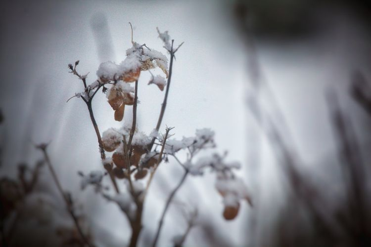 es war ein grauer tag...🌬🌨 Winter Plant Close-up Nature Cold Temperature Flower No People Snow Day Tree Beauty In Nature Outdoors Germany🇩🇪 My Picture 2017 First Eyeem Photo Snow Covered Have A Nice Day♥ Schnee Frost Focus On Foreground Dried Plant Beauty In Nature 400mm Lens Low Angle View Winter