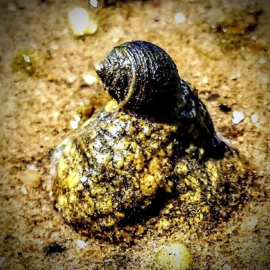 Snail, Cape Cod