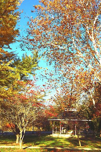 Hello my old friends...It's so nice seeing you again. Nature Is My Best Friend Hugging A Tree Trees Tree_collection  From My Point Of View Nature Nature_collection Taking Photos EyeEm Nature Lover Historical Fall Creek Park Peace And Quiet Enjoying Life Light And Shadow EyeEm EyeEmBestPics Popular Photos Autumn Autumn Colors Autumn Leaves Beautiful Nature EyeEm Gallery Nature Photography Tadaa Community Showcase: November