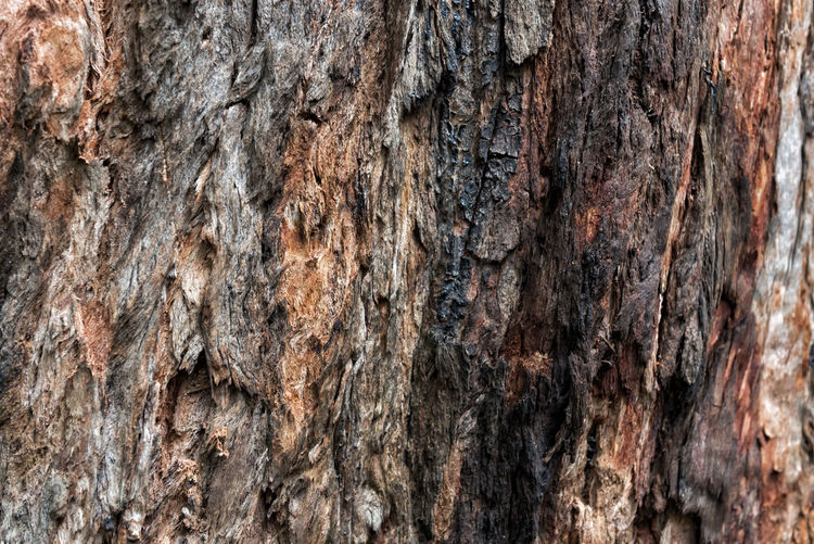 Tree Bark Backgrounds Full Frame Textured  Close-up Tree Tree Trunk Rough Plant Bark Trunk Brown Nature Natural Pattern Bark Bark Texture Bark Texture Background Tree Bark Plant Textures Abstract Backdrop Natural Surface Pattern Wood - Material Layer