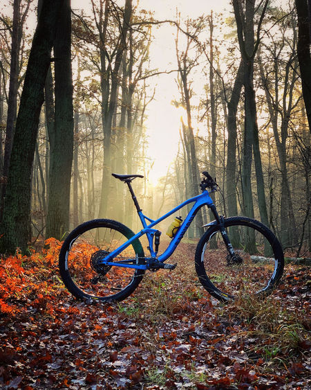 Bicycle parked by tree in forest during autumn