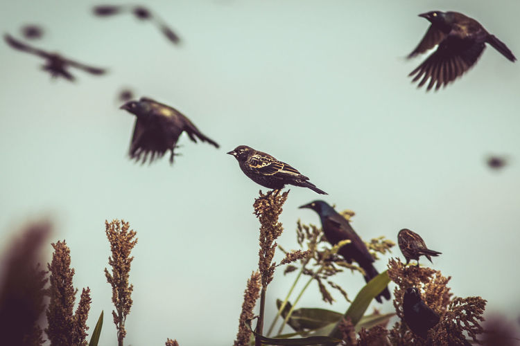 Animal Animal Themes Animal Wildlife Animals In The Wild Beauty In Nature Bird Day Flying Focus On Foreground Group Of Animals Mid-air Nature No People Plant Selective Focus Sky Spread Wings Tree Vertebrate