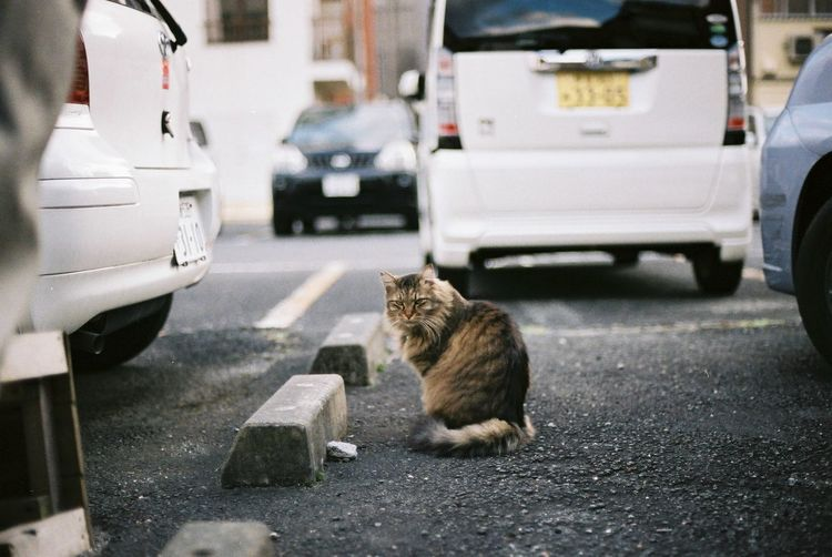 Cat Sitting On Street