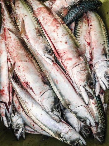 Full Frame Backgrounds No People Food And Drink Food Animal Healthy Eating For Sale Indoors  Close-up Raw Food Freshness Wellbeing High Angle View Seafood Vertebrate Fishing Industry Fish Pattern Still Life