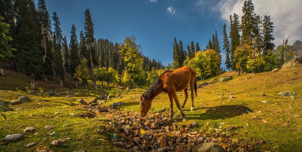 Full Length Of Horse Grazing On Field