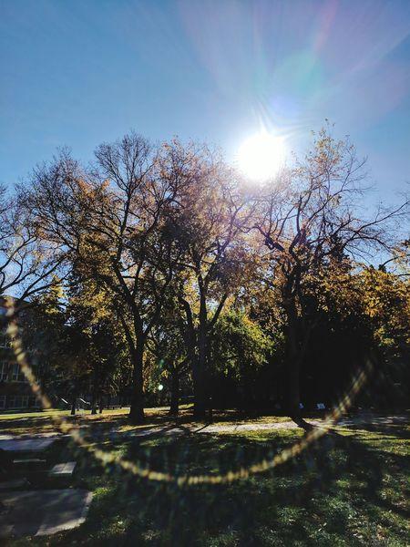University of Alberta First Eyeem Photo Fall Season Flares In Nature Park