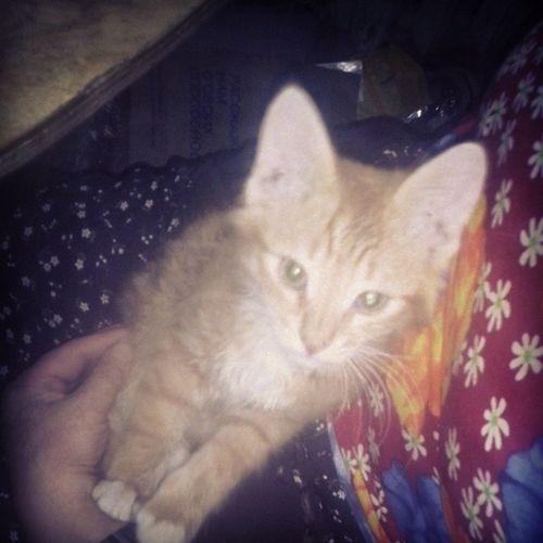 кошастик кошарик любимец Catgoesmeow catlover cat kitty kitten