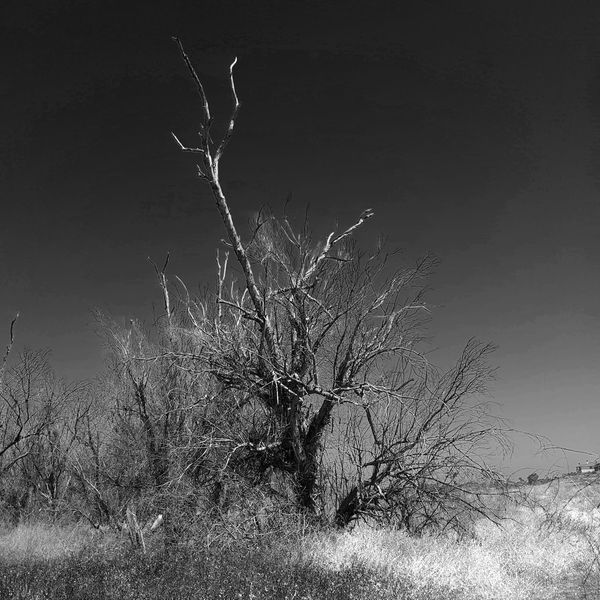 Bare Tree Beauty In Nature Black And White Branch Dead Tree Monochrome Nature No People Outdoors Sky Square Tree
