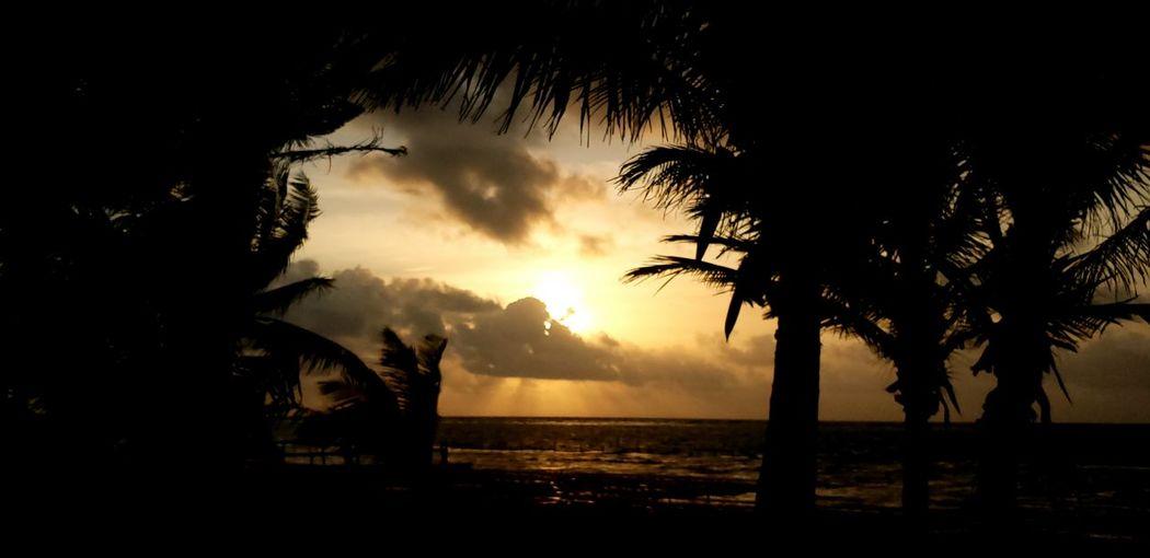 The Traveler - 2019 EyeEm Awards Tree Sea Water Sunset Palm Tree Silhouette Heat - Temperature Power In Nature Beach Sky