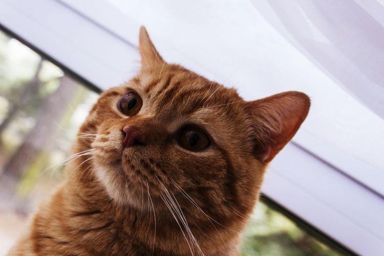 Cat Cats Katze Katzen Katzenfoto EyeEm Best Shots Open Edit Animal_collection Pet Photography  Animal