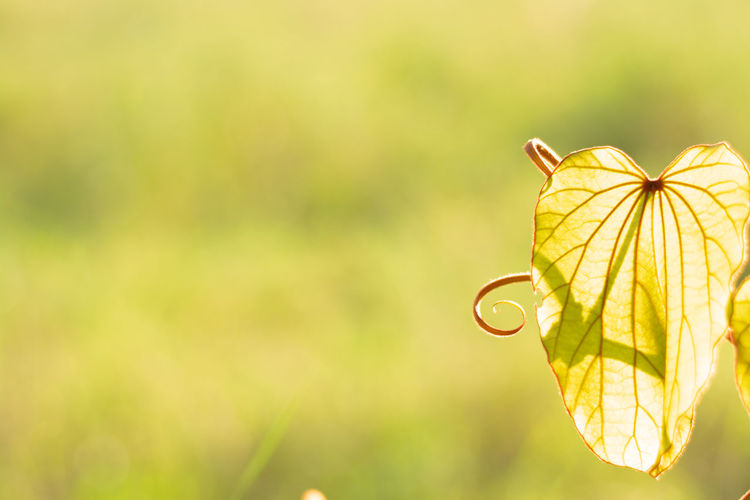 Focus On Foreground Plant Close-up Yellow Nature Plant Part No People Leaf Outdoors Growth Beauty In Nature Autumn Sunlight Copy Space Tree Green Color Freshness Selective Focus Fragility Change Leaves