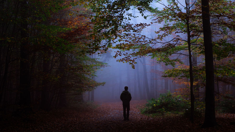 EyeEmNewHere Autumn Beauty In Nature Day Fog Forest Full Length Growth Landscape Men Nature One Person Outdoors People Real People Rear View Scenics Standing Sächsische Schweiz Tranquil Scene Tranquility Tree Tree Trunk Walking