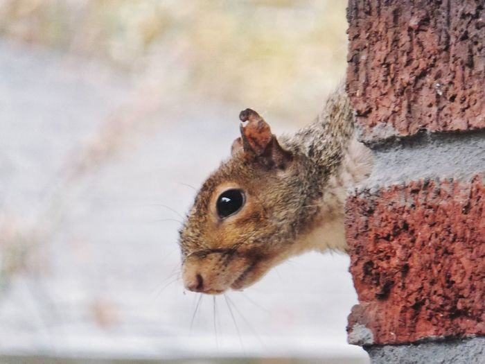 Squirrel One Animal Animal Themes Rodent Close-up Mammal Animals In The Wild Nature Outdoors