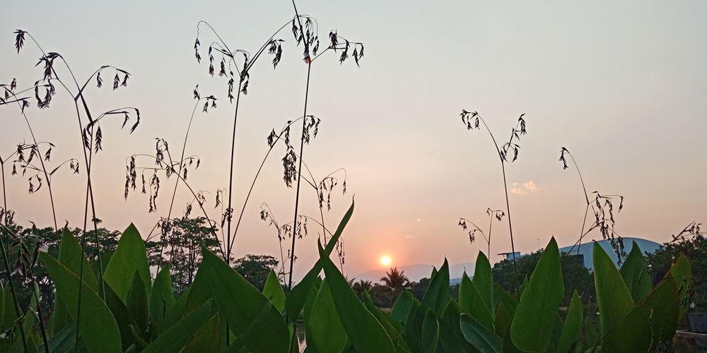 Bird Flying Sunset Rural Scene Silhouette Flock Of Birds Defocused Sky Plant