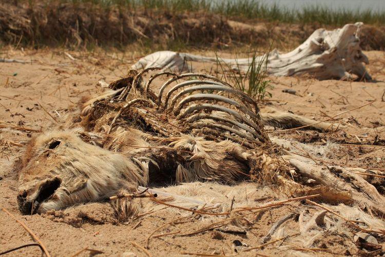 View of dead deer on beach