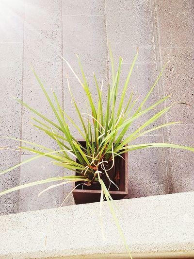Plant First Eyeem Photo
