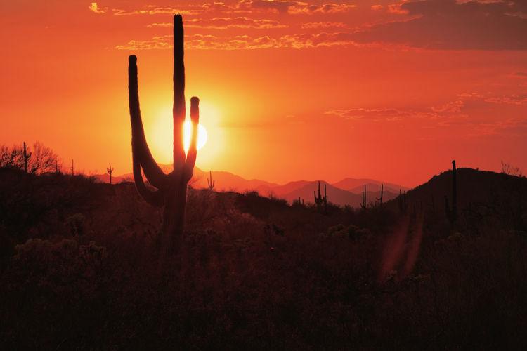 Silhouette cactus plants on landscape against sunset sky