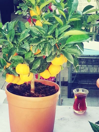 Orange Flowerpot Tea Fruit