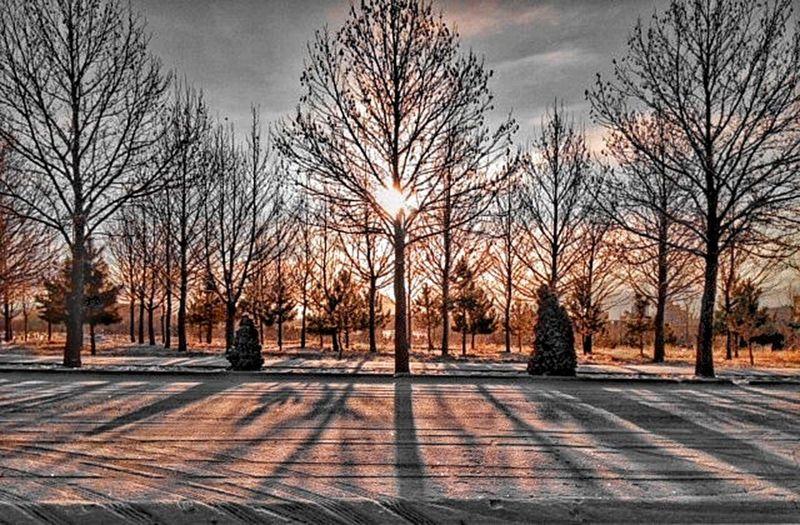 Tree Tree And Sky Tree_collection  Treescape Sky Sun Sunset Sunshine Sunlight Mobilephonephotography Mobilography Mobile Photography Honor3c
