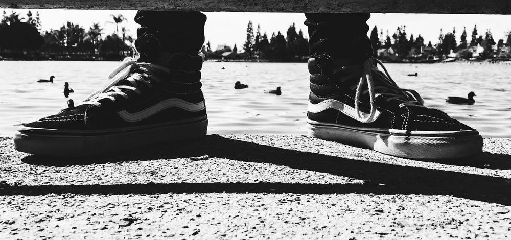 Vans at the lake. Close-up Day Ducks Ducks At The Lake IPhone7Plus IPhoneography Iphonephotography Lake Lightroom Nature Outdoors Shadow Sunlight Vans Vansgirls VSCO Water